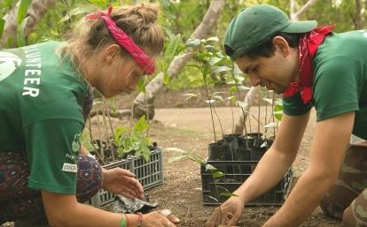 Projects Abroad volunteers planting seedlings during Conservation volunteering in Costa Rica for teenagers